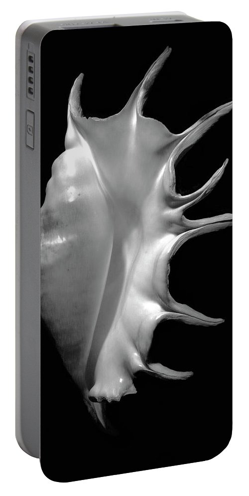 Seashell Portable Battery Charger featuring the photograph Giant Spider Conch Seashell Lambis Truncata by Frank Wilson