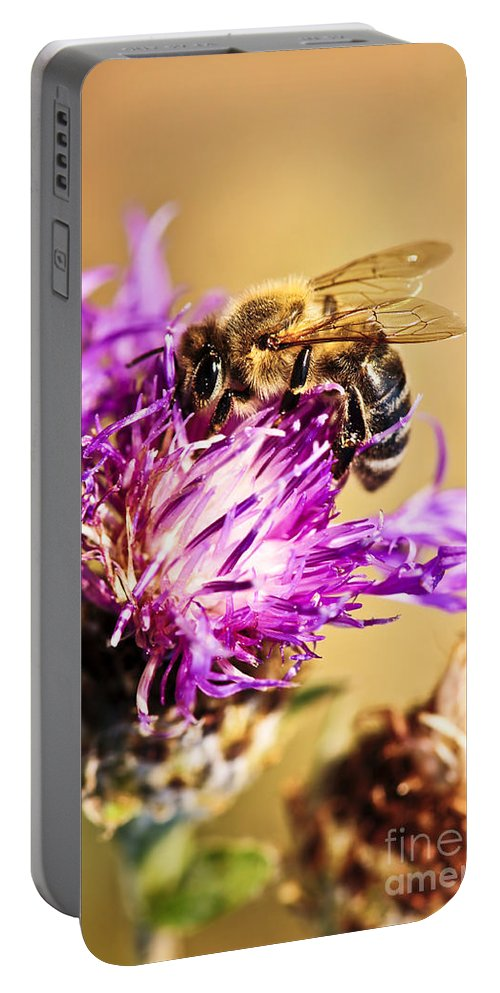 Honey Portable Battery Charger featuring the photograph Honey Bee by Elena Elisseeva