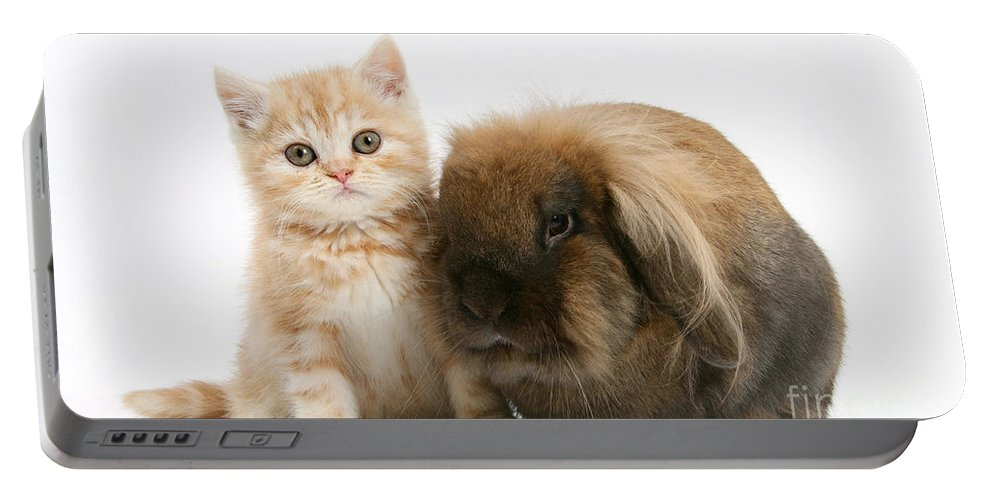 Nature Portable Battery Charger featuring the photograph Kitten And Rabbit by Mark Taylor