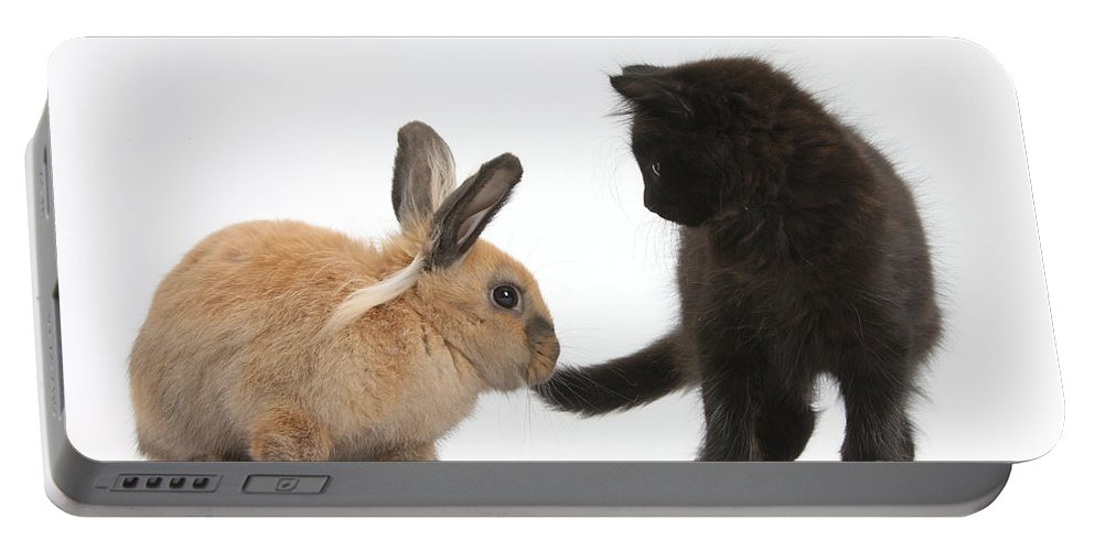 Nature Portable Battery Charger featuring the photograph Kitten And Young Rabbit by Mark Taylor