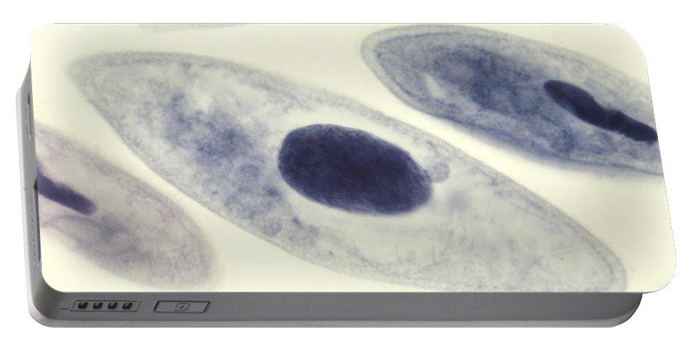 Paramecia Portable Battery Charger featuring the photograph Paramecium Caudatum by M. I. Walker