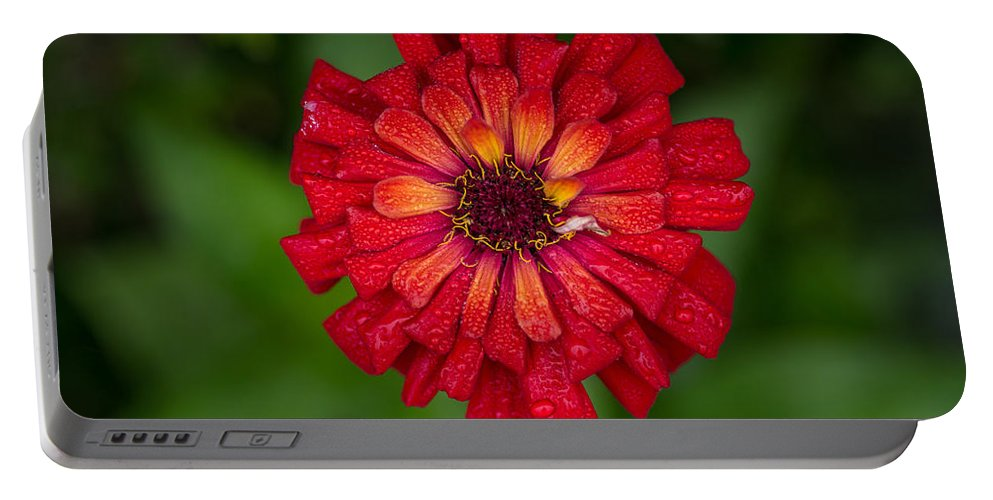 Flower Portable Battery Charger featuring the photograph Red Flower by Greg Nyquist