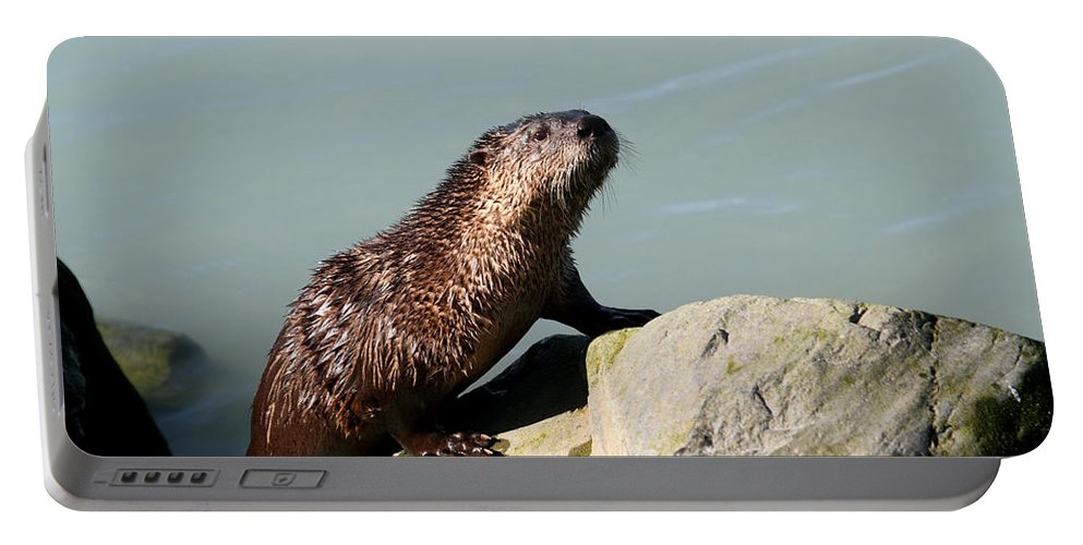 Doug Lloyd Portable Battery Charger featuring the photograph River Otter by Doug Lloyd