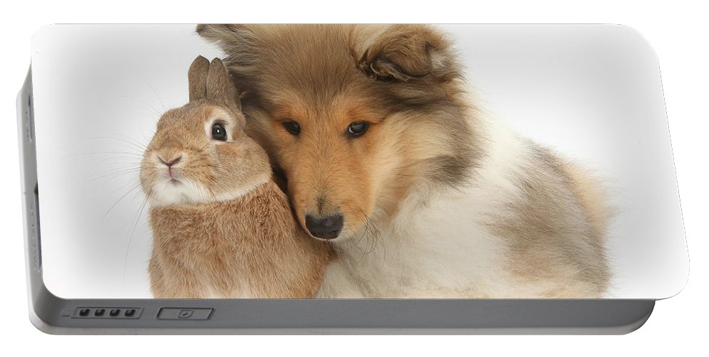 Fauna Portable Battery Charger featuring the photograph Rough Collie Pup With Rabbit by Mark Taylor