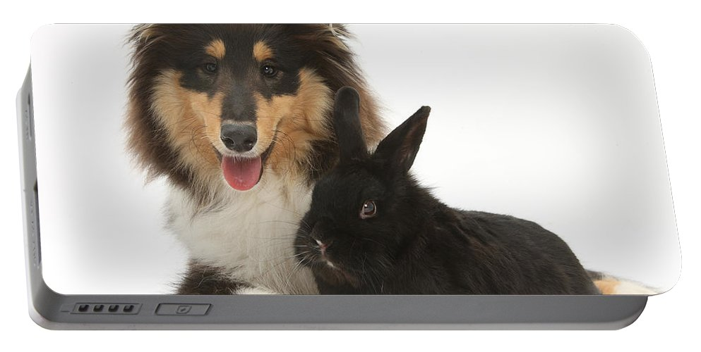Nature Portable Battery Charger featuring the photograph Rough Collie With Black Rabbit by Mark Taylor