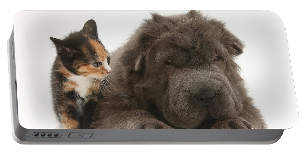 Animal Portable Battery Charger featuring the photograph Shar Pei Puppy And Tortoiseshell Kitten by Mark Taylor