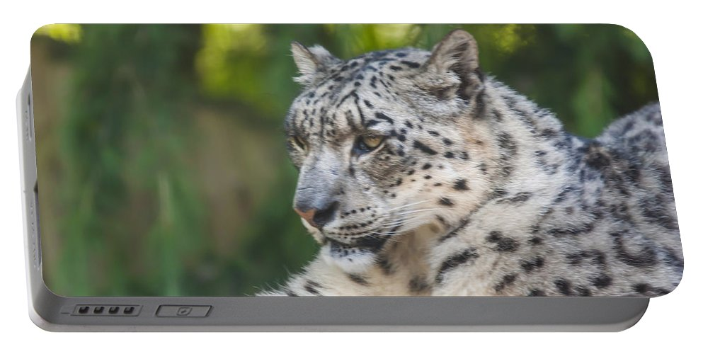 Dawn Oconnor Dawnoconnorphotos@gmail.com Portable Battery Charger featuring the photograph Snow Leopard by Dawn OConnor