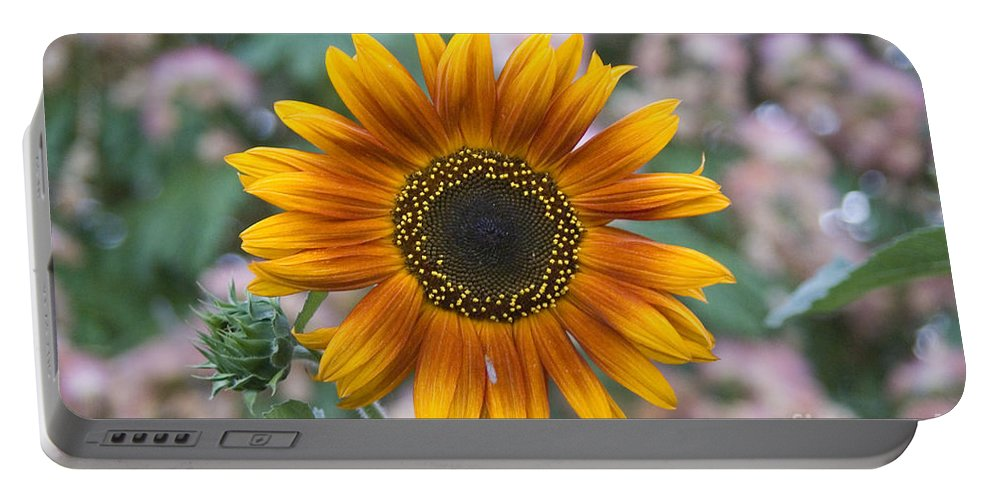 Flower Portable Battery Charger featuring the photograph Sunflower by Jim And Emily Bush