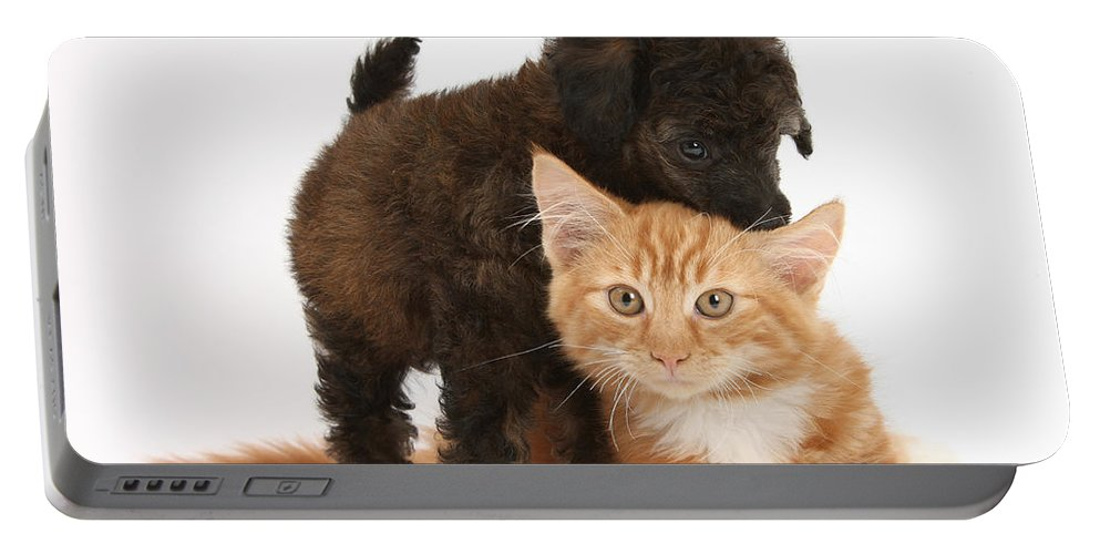 Animal Portable Battery Charger featuring the photograph Toy Poodle Puppy With Kitten by Mark Taylor