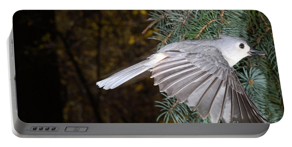 Tufted Titmouse Portable Battery Charger featuring the photograph Tufted Titmouse In Flight by Ted Kinsman
