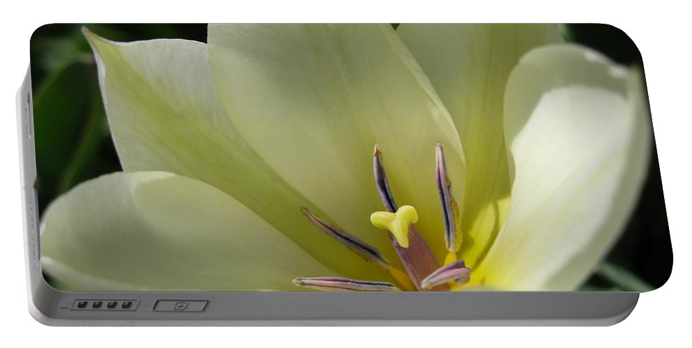 Tulip Portable Battery Charger featuring the photograph Tulip Named Perles De Printemp by J McCombie