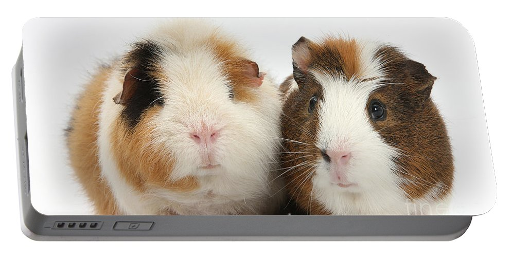 Nature Portable Battery Charger featuring the photograph Two Guinea Pigs by Mark Taylor