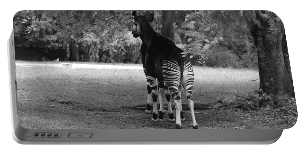 Animal Portable Battery Charger featuring the photograph Two Stripes In Black And White by Rob Hans