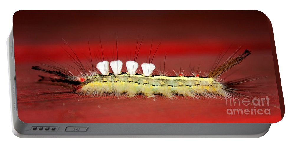 Caterpillar Portable Battery Charger featuring the photograph White Tussock Caterpillar by Barbara McMahon