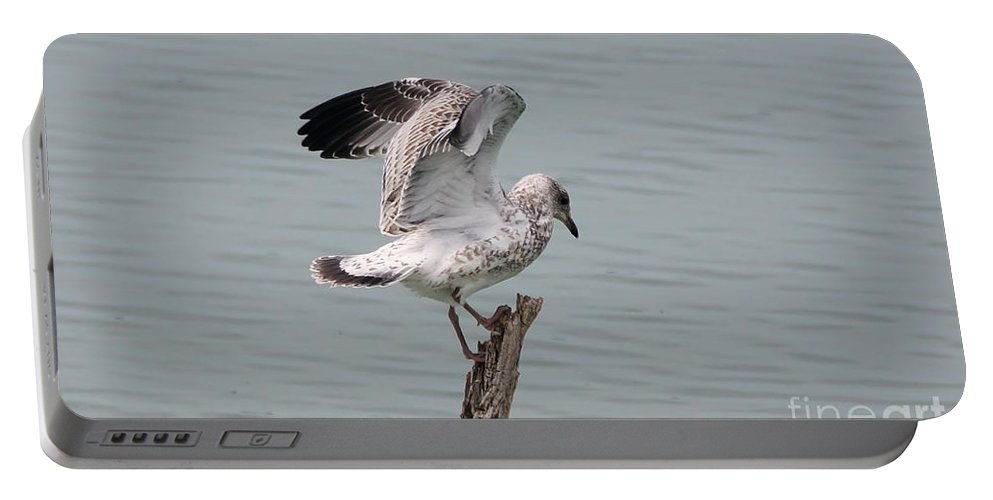 Seagull Portable Battery Charger featuring the photograph Wing Test by Lori Tordsen