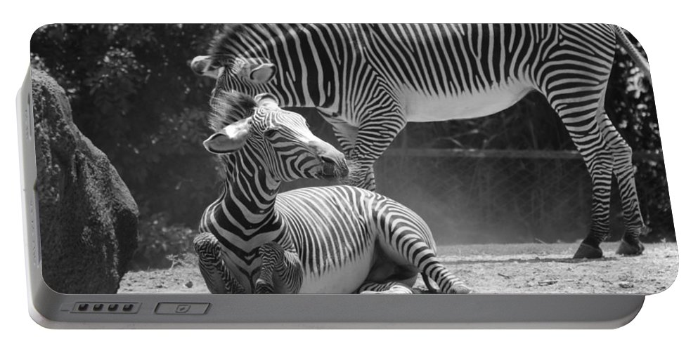 Animal Portable Battery Charger featuring the photograph Zebras In Black And White by Rob Hans