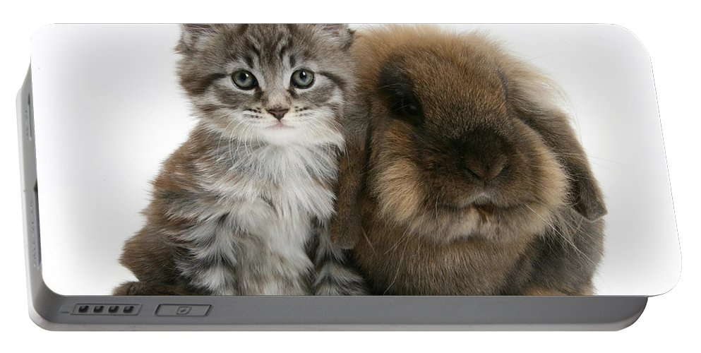 Maine Coon Kitten Portable Battery Charger featuring the photograph Kitten And Rabbit by Mark Taylor