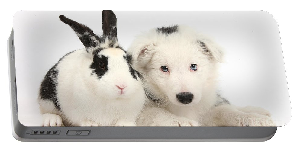Nature Portable Battery Charger featuring the photograph Puppy And Rabbit by Mark Taylor