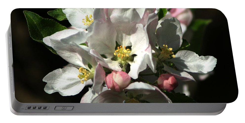 Apple Blossom Portable Battery Charger featuring the photograph Apple Blossom by Chris Day