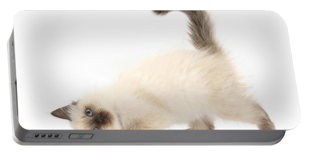 Animal Portable Battery Charger featuring the photograph Birman-cross Kitten by Mark Taylor