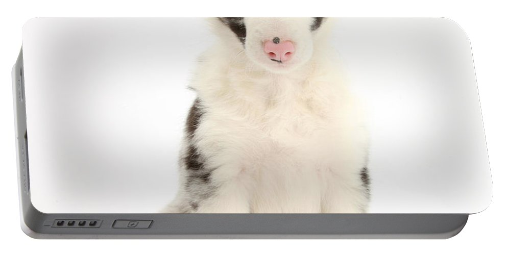 Animal Portable Battery Charger featuring the photograph Border Collie Puppy by Mark Taylor