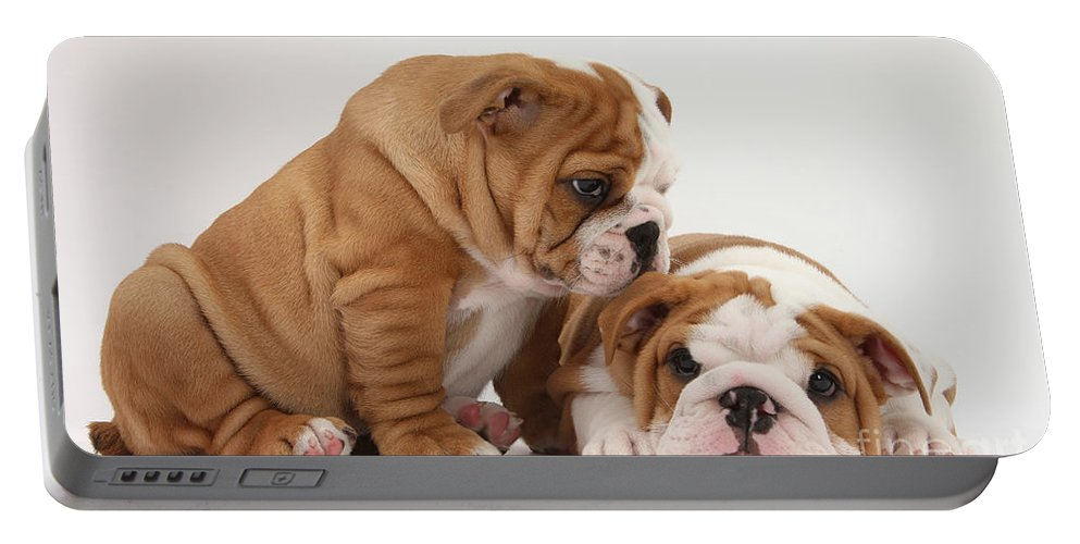 Dog Portable Battery Charger featuring the photograph Bulldog Pups by Mark Taylor