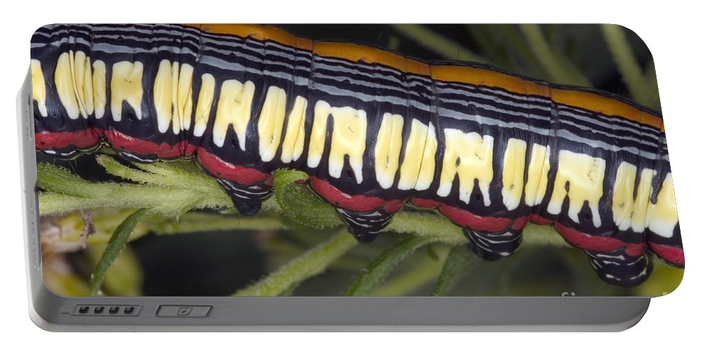 Caterpillar Portable Battery Charger featuring the photograph Caterpillar by Ted Kinsman