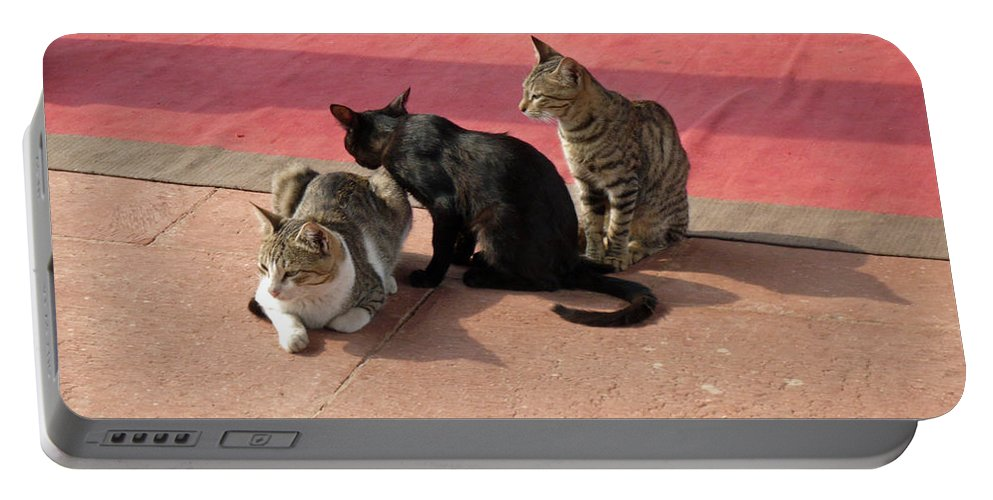 Cats Portable Battery Charger featuring the photograph 3 Cats Looking Pensive by Ashish Agarwal