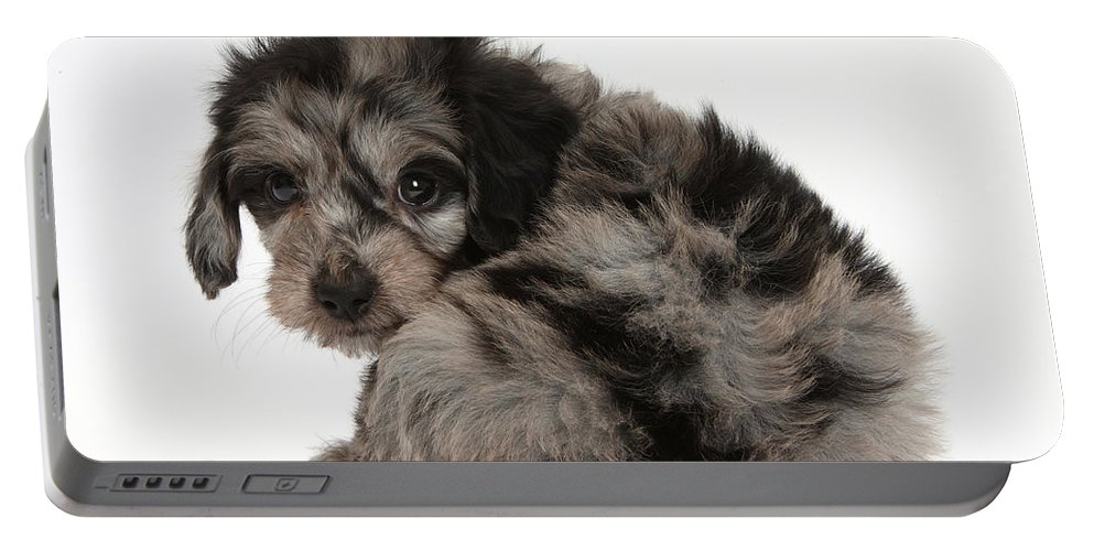 Nature Portable Battery Charger featuring the photograph Doxie-doodle Puppy by Mark Taylor