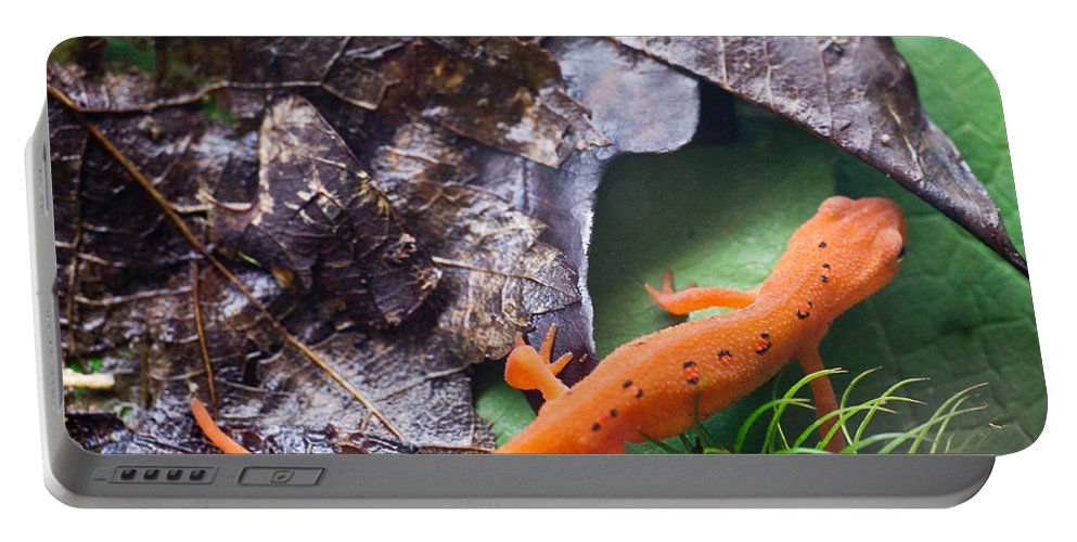 Eastern Portable Battery Charger featuring the photograph Easterm Newt Nnotophthalmus Viridescens 2 by Douglas Barnett