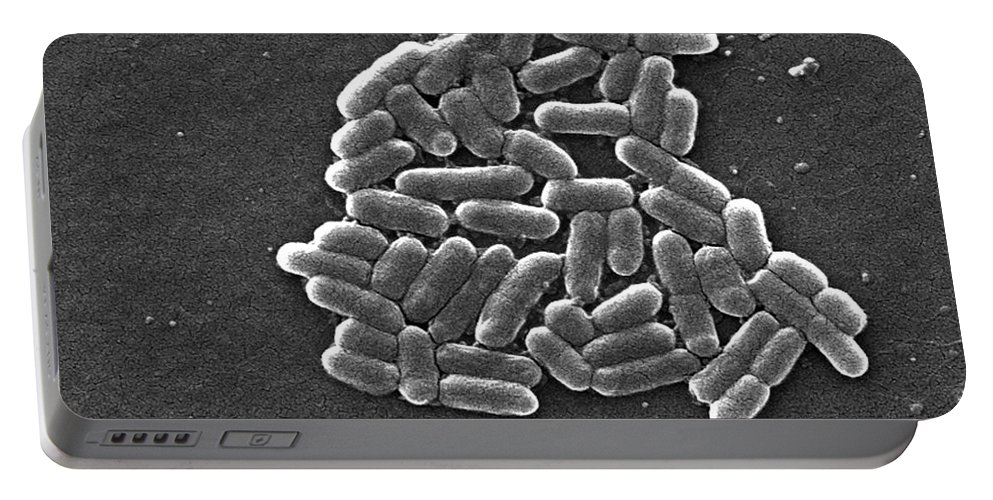 Science Portable Battery Charger featuring the photograph Escherichia Coli O157h7 Bacteria, Sem by Science Source