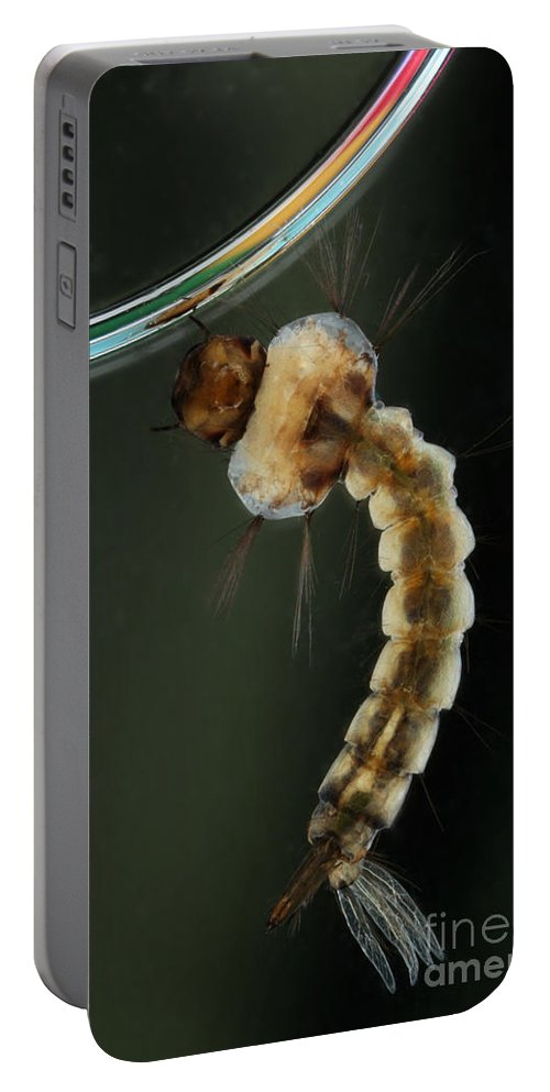 Culicine Portable Battery Charger featuring the photograph Mosquito Larva by Ted Kinsman