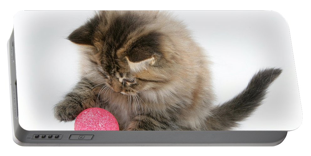 Animal Portable Battery Charger featuring the photograph Playful Kitten by Mark Taylor