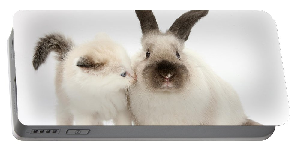 Nature Portable Battery Charger featuring the photograph Ragdoll-cross Kitten And Young by Mark Taylor