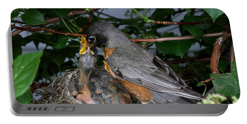Robin Portable Battery Charger featuring the photograph Robin Feeding Its Young by Ted Kinsman