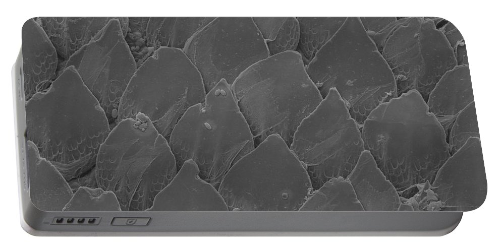 Sem Portable Battery Charger featuring the photograph Shark Skin, Sem by Ted Kinsman