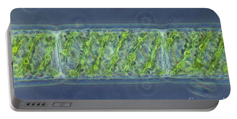 Science Portable Battery Charger featuring the photograph Spirogyra Sp. Algae Lm by M. I. Walker