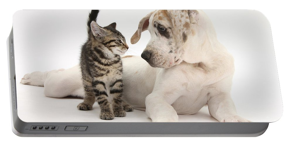 Animal Portable Battery Charger featuring the photograph Tabby Kitten & Great Dane Pup by Mark Taylor