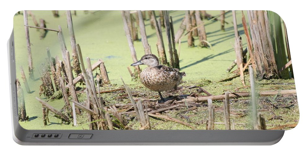 Ducks Portable Battery Charger featuring the photograph Teal Duck by Lori Tordsen
