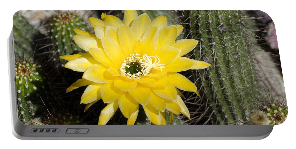 Cactus Portable Battery Charger featuring the photograph Yellow Cactus Flower by Jim And Emily Bush