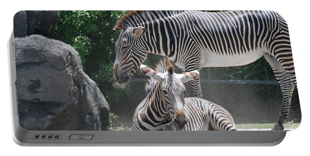 Animal Portable Battery Charger featuring the photograph Zebras by Rob Hans