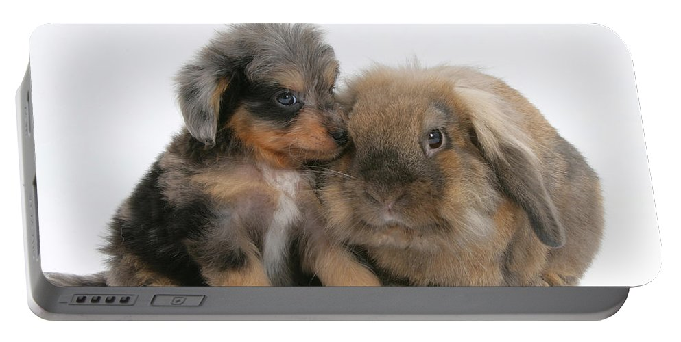 Animal Portable Battery Charger featuring the photograph Puppy And Rabbit by Mark Taylor