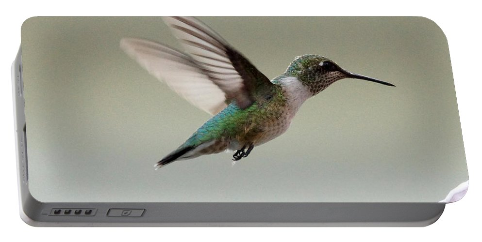 Hummingbird Portable Battery Charger featuring the photograph Hummingbird by Lori Tordsen