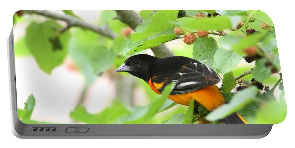 Doug Lloyd Portable Battery Charger featuring the photograph Baltimore Oriole by Doug Lloyd