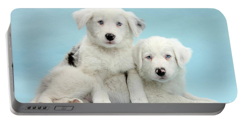 Nature Portable Battery Charger featuring the photograph Border Collie Puppies by Mark Taylor