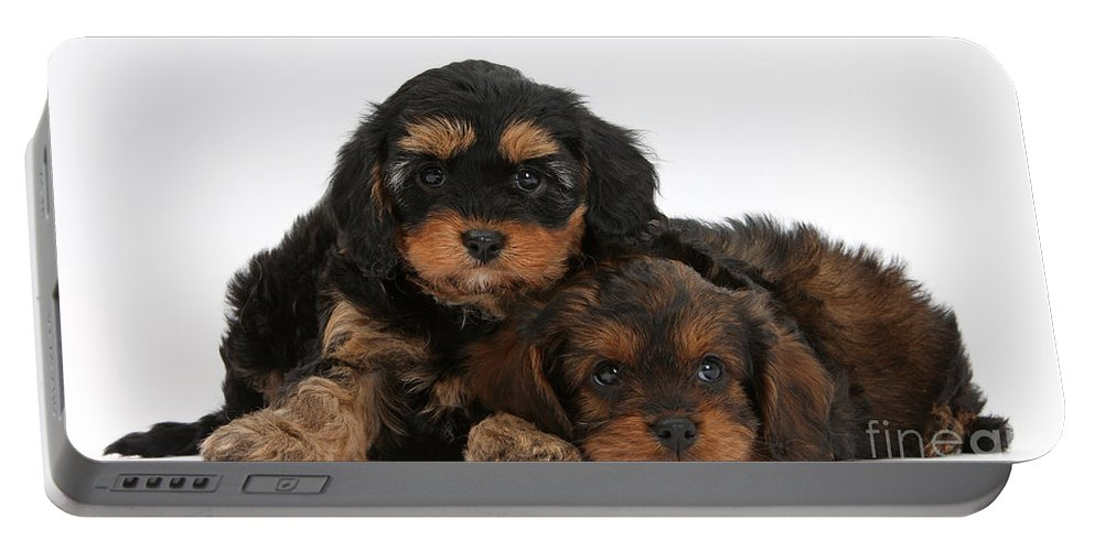 Dog Portable Battery Charger featuring the photograph Cavapoo Pups by Mark Taylor