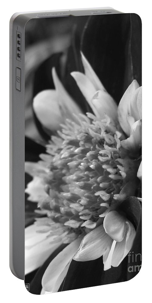 Dahlia Portable Battery Charger featuring the photograph Dahlia Named Mary Eveline by J McCombie