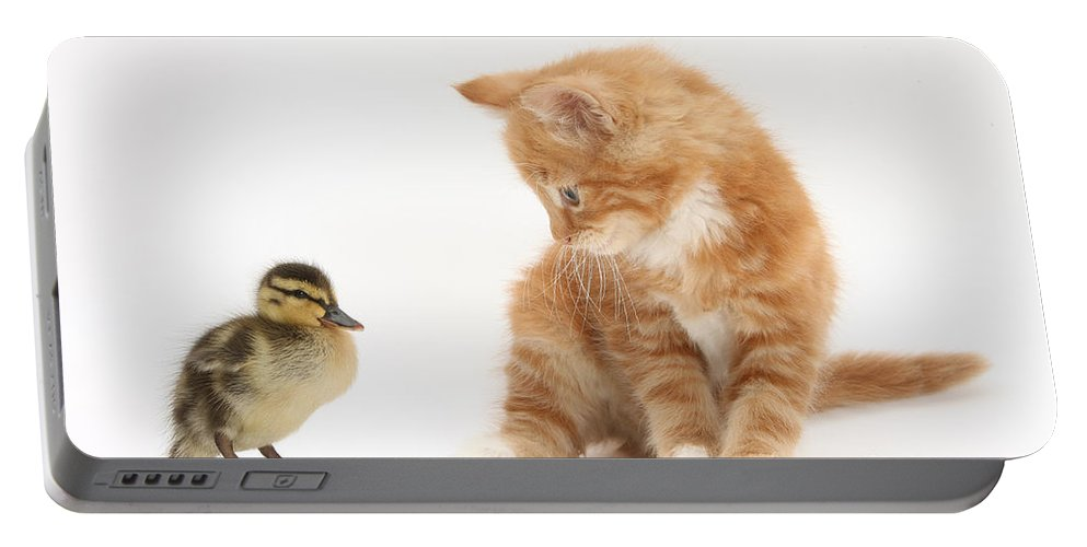 Nature Portable Battery Charger featuring the photograph Ginger Kitten And Mallard Duckling by Mark Taylor