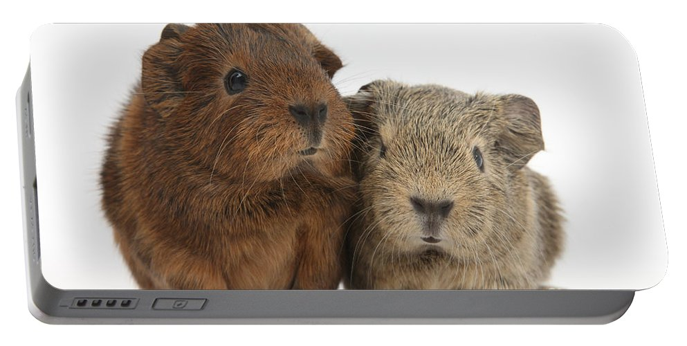 Animal Portable Battery Charger featuring the photograph Guinea Pigs by Mark Taylor