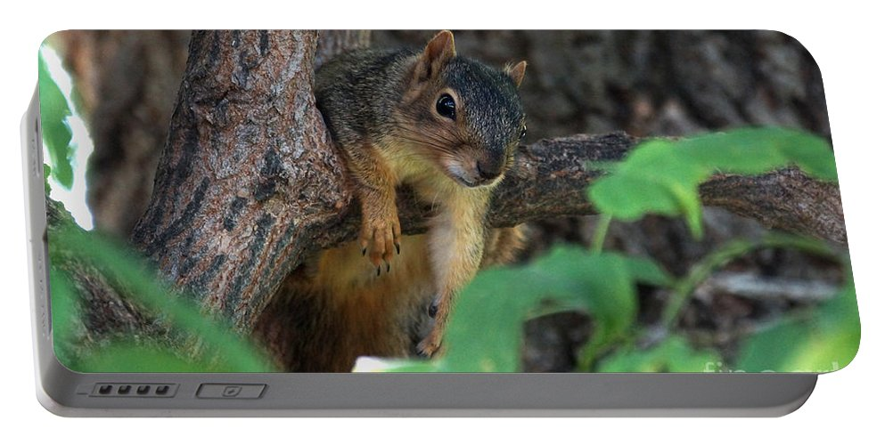 Squirrel Portable Battery Charger featuring the photograph Hanging Around by Lori Tordsen